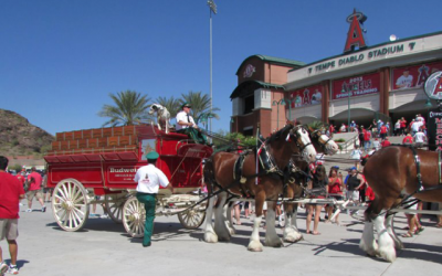 Budweiser Clydesdales to Appear at 2018 Spring Training