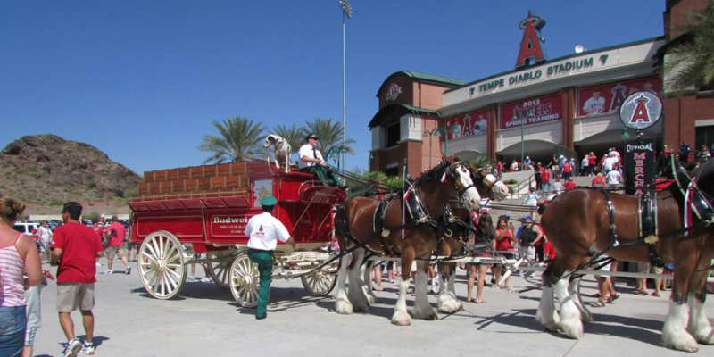 Budweiser Clydesdales to Appear at Spring Training