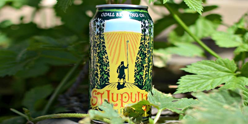 Odell Brewing Releases St. Lupulin in Twelve Pack Cans