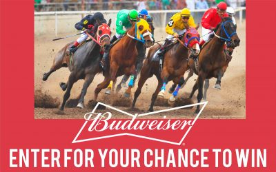 Budweiser Horse Racing Sweepstakes